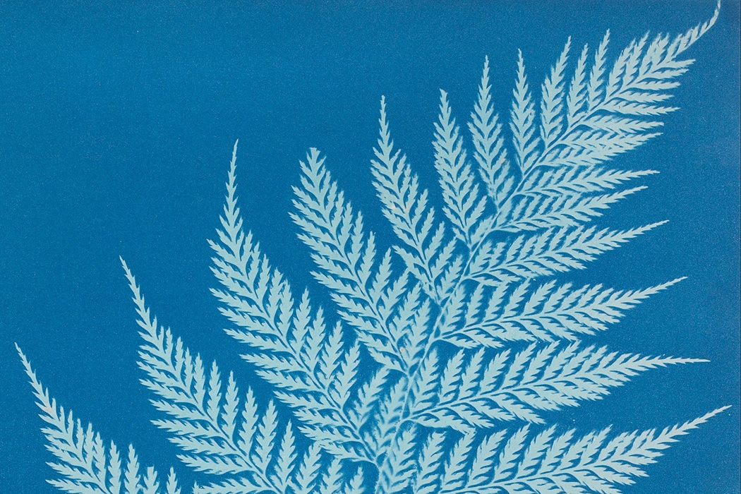 Anna Atkins Calotype Process Photography